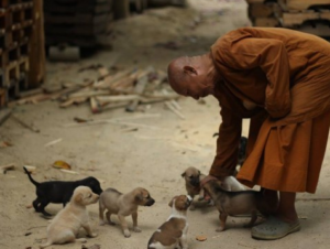 stray dogs in thailand